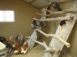 Barns The Living Farm