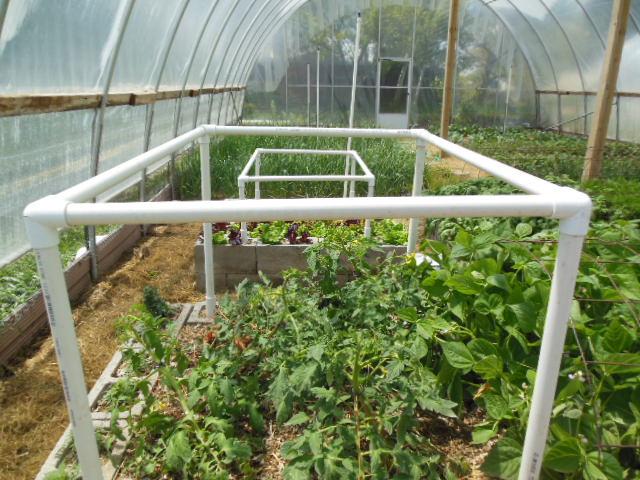 Build A Tomato Trellis
