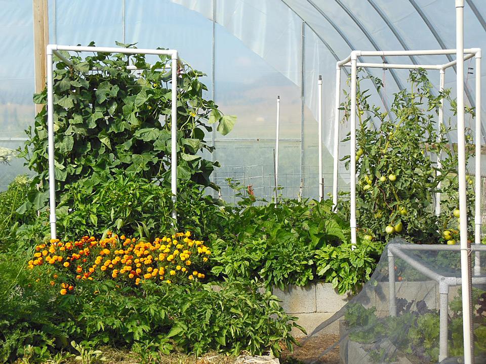 abundance-gardens-course-2