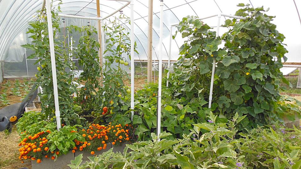 abundance-gardens-course-4