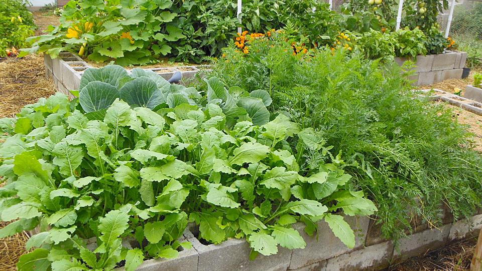 abundance-gardens-course-5