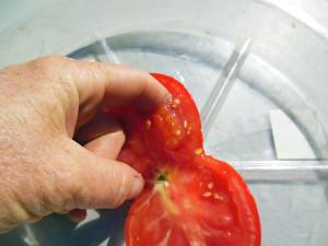 tomato-seeds-7
