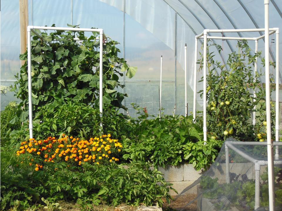 Abundance Demonstration Garden