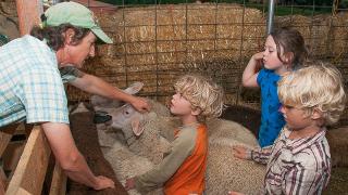 farm-tour-sheep