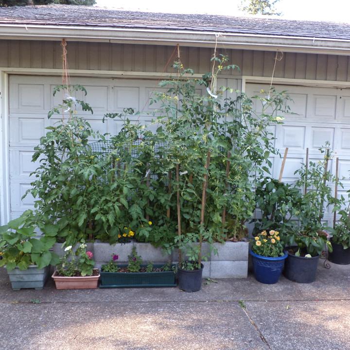 student-garden-linnie