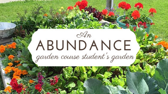 An Abundance Garden Student Garden