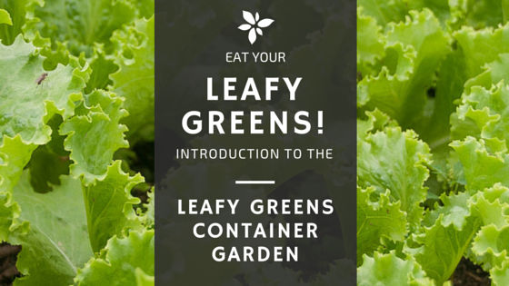 Eat Your Greens – Leafy Greens Container Garden Course