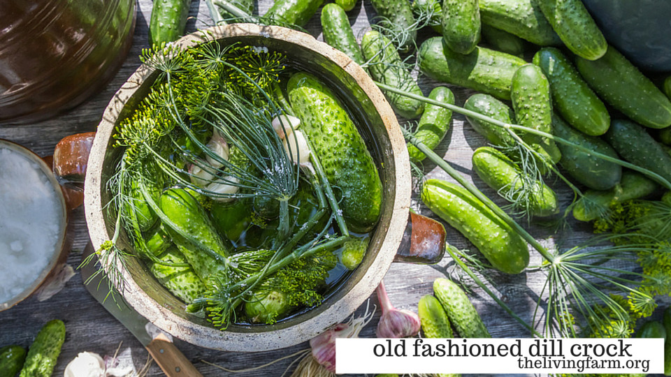 Make an Old Fashioned Dill Crock