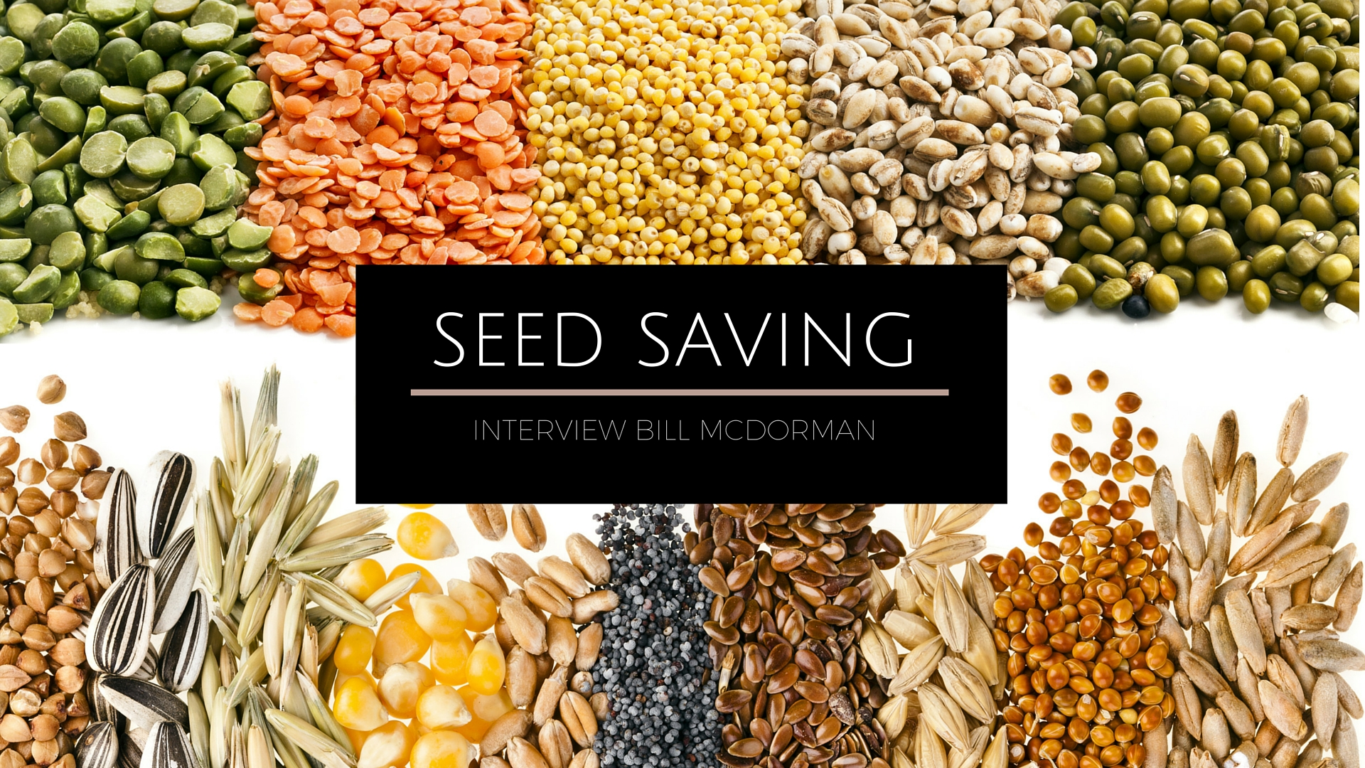 The Secrets To Seed Saving Bill Mcdorman Interview