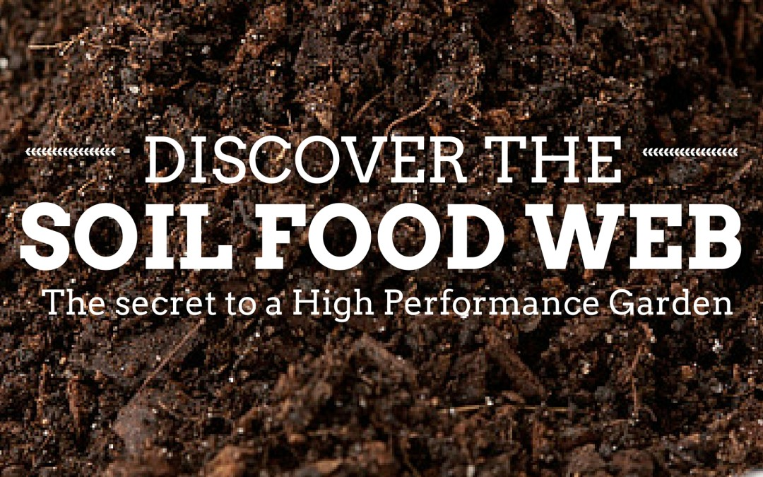 The Soil Food Web – the Secret to a High Performance Garden