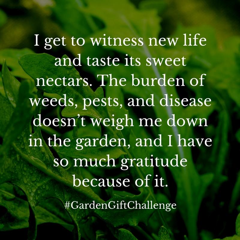 Gratitude in the Garden