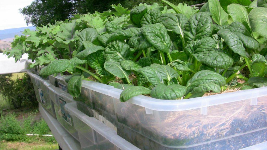 Pequeños jardines de agua de contenedores | Lorenz's OK Seeds, LLC