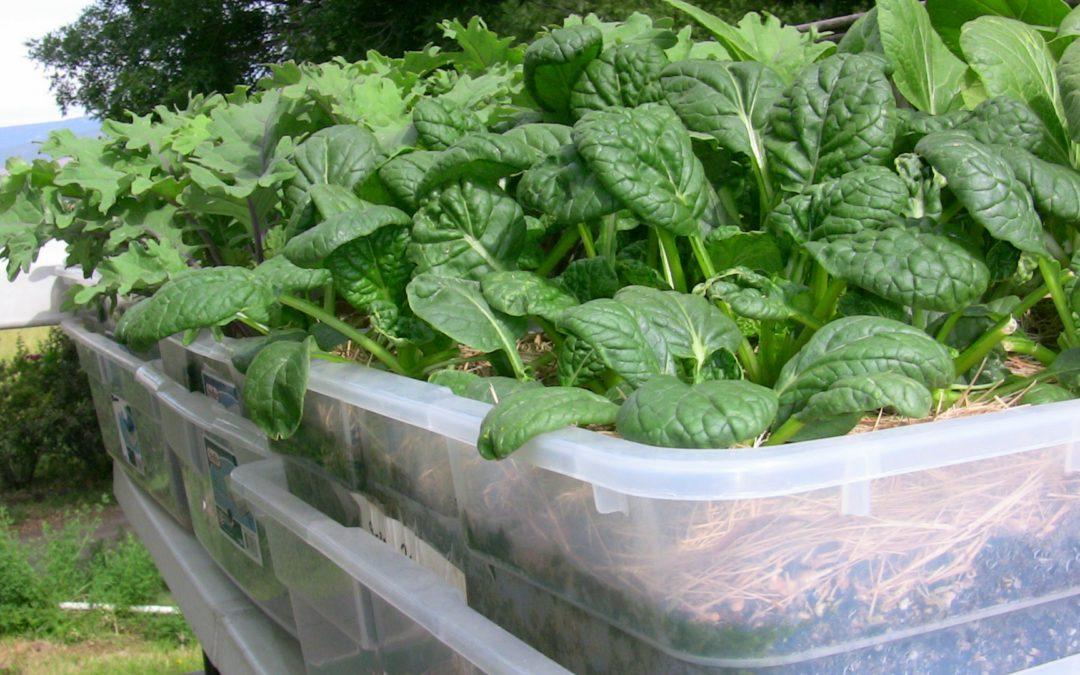 Cómo hacer crecer un jardín de contenedores en su apartamento (o pequeño espacio)