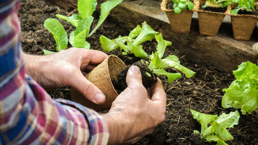 Más grande realmente es mejor, consejos sobre jardinería de contenedores | Ganadores probados