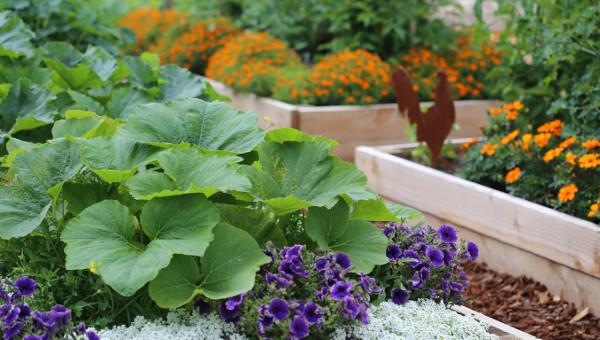 abundance garden course