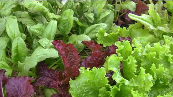leafy greens garden course